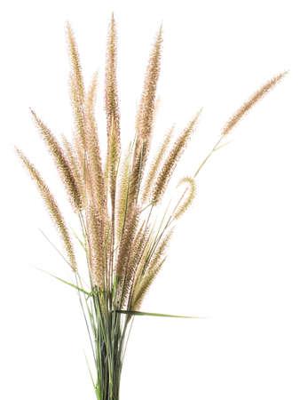 Bunch of dekorative Gräser Blume auf weißem Hintergrund