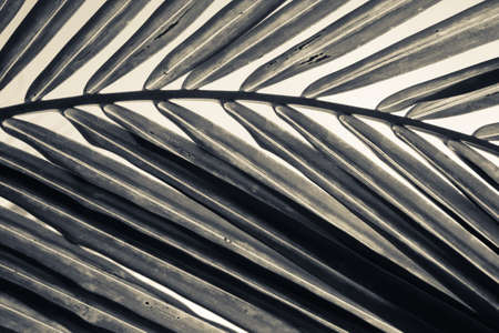 monotone: Abstract palm leaf in monotone color Stock Photo