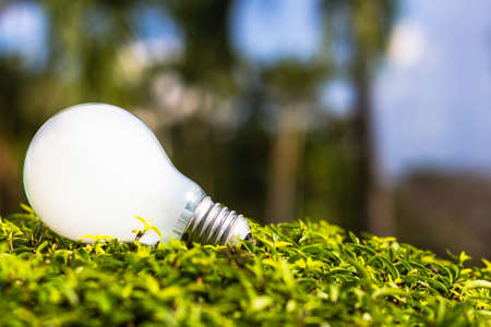 White light bulb on plant, inspired by nature, energy saving, innovative idea for environment concept Stock Photo