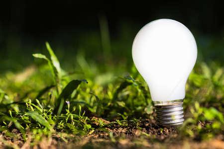 sustentabilidad: Bombilla que crece en la tierra en el jard�n, idea innovadora para el concepto de naturaleza
