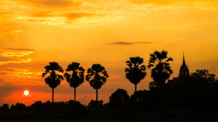 toddy palm: Silhouette toddy palm tree and sunset in countryside of Thailand