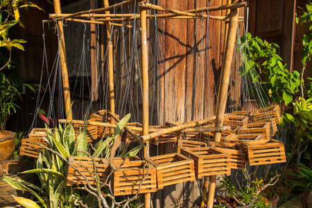hanged: Wood basket hanged pots for orchid plant