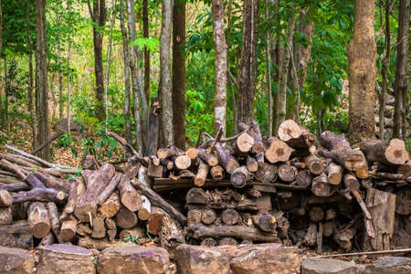 firewood: Pile of cut wood in the forest reserved to be firewood Stock Photo