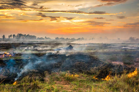 bush fire: Fire and smoke in the field cause by human to prepare soil for coming cultivation
