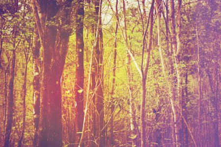deciduous: Mixed deciduous forest in vintage color style Stock Photo