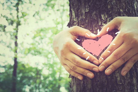 heart drawing: Hands make a heart sign on tree trunk with drawing heart, retro color style Stock Photo