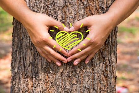 Hands make a heart sign on tree trunk with drawing heart Stockfoto