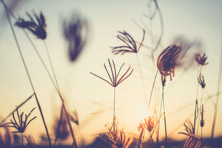 Vintage photo of grasses at sunset Stock Photo