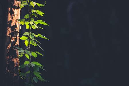 hanged: Leaves branch hanged on tree trunk in the deep forest Stock Photo