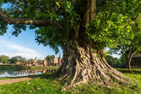 Big Bodhi tree in Sukhothai Historical Park Reklamní fotografie - 48937607