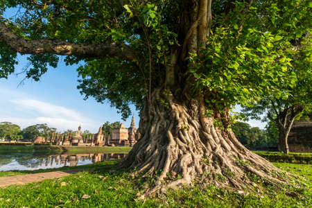 Grote Bodhi boom in Sukhothai Historical Park