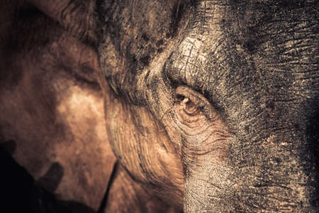 black stones: Closeup eye of small elephant statue decorated in the garden Stock Photo
