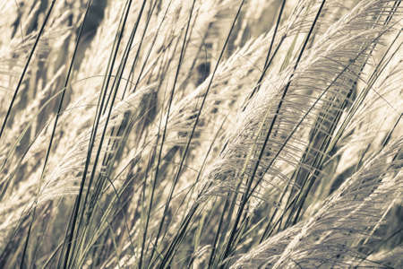 waver: Closeup Reed field waver in the wind Stock Photo