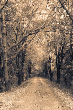 Road through the forest, sepia color Stock Photo