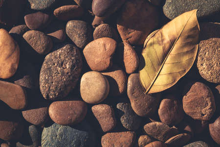 dry leaves: Pebbles and leaf in sunlight in the ground, retro color style Stock Photo