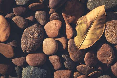 hojas secas: Piedras y hojas en la luz del sol en el suelo, el estilo retro de color