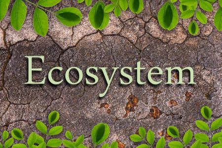 ecosystem: Texto del ecosistema de la piedra y planta de la enredadera de fondo Foto de archivo