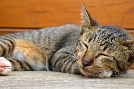 wood bench: Cat sleeping on wood bench