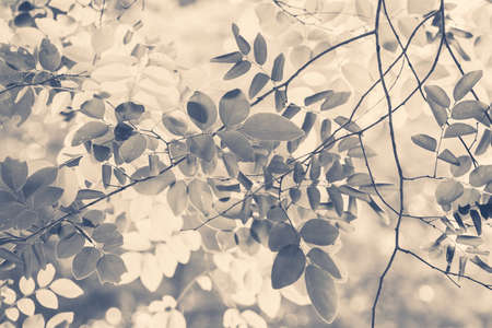 Abstract leaves on treetop in the forest, vintage color style