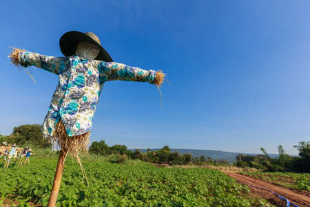 Scarecrow in sunflower farm, countryside of Thailand