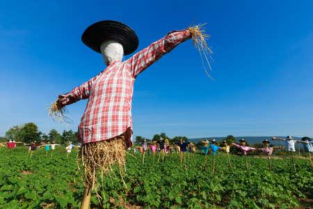 espantapajaros: Espantapájaros en granja de girasol, el campo de Tailandia