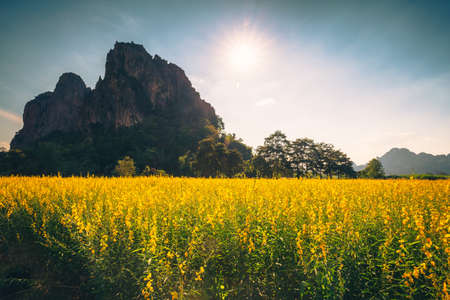 Vintage photo of yellow field in countryside