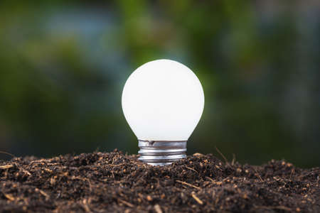 Small light bulb growing from soil
