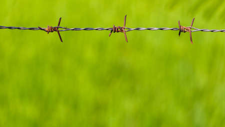Old barbed wire fence on green field background Stock Photo