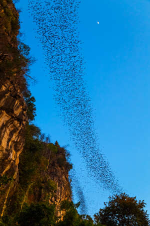A lot of bats flying out of the cave to forage at Noen Maprang district, Phitsanulok, Thailand