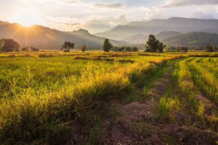 Pola uprawne po żniwach, piękne wiejskie krajobrazy przed zachodem słońca w Lom Kao, prowincja Petchabun w Tajlandii