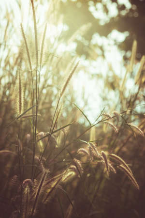 Vintage grasses flowers blooming against the sunlight in the forest