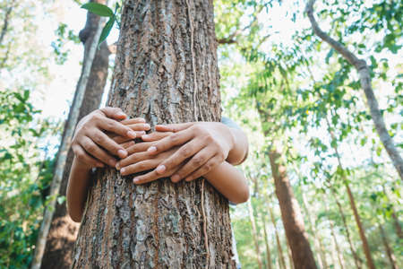 Parent and childs hands cover the old tree in the tropical forest, save the forest for the future