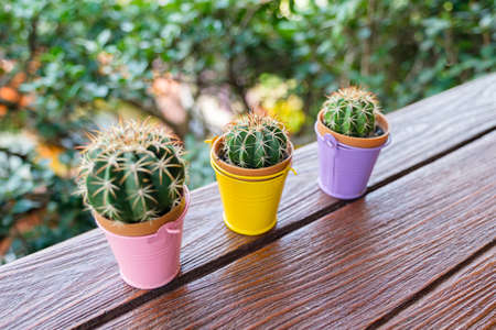 Little cactus in colorful pots made of galvanized iron, decorated on the wood balcony in the garden