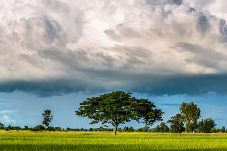 Big rain clouds are low to the ground over the rice field, rainy season in Thailand Stock Photo