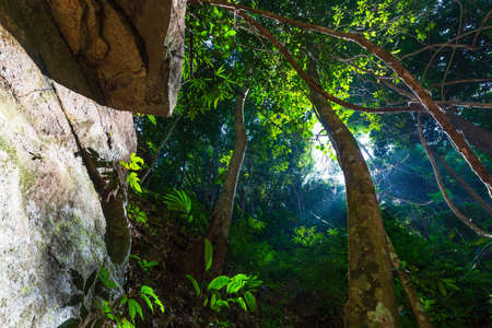 Deep tropical forest with sunlight down from the hole of treetop