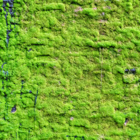 Moss on granite wall in the garden as background or texture
