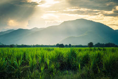Sugarcane farm and mountain view before sunset, countryside view not far from UNESCO Historicol Park, travel around Sukhothai, Thailand Stockfoto