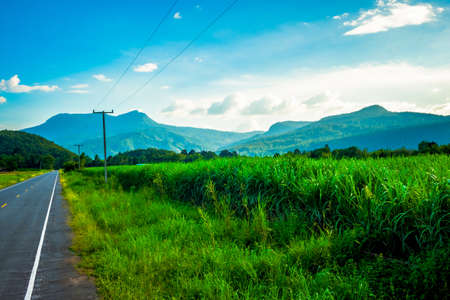 Sugarcane farm along the road and Khao Luang mountain view in countryside of Sukhothai province, Thailand