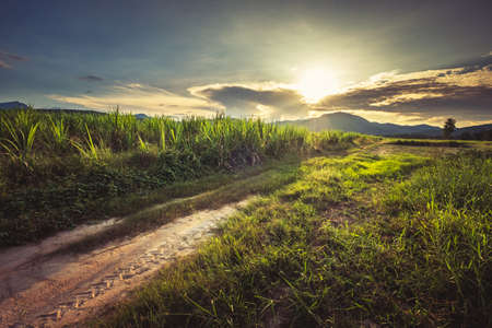 Landscape of field and dirt road in agriculture farm before sunset, vintage color style