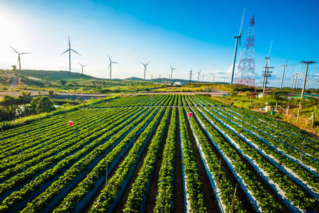 Strawberry farm on the mountain with wind turbines view, travel scenic at Khao Koh in Petchabun province of Thailand,