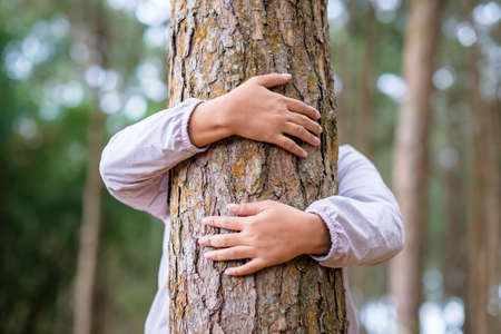 Woman give a hug on a pine tree in the forest for environment concept