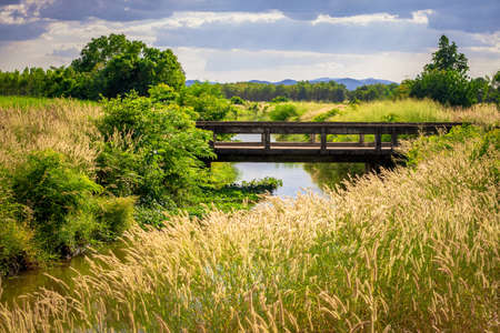 Beautiful landscape of the old bridge with grass flowers blooming on the bank, countryside view at Thong Saen Khan district, Uttaradit, Thailand