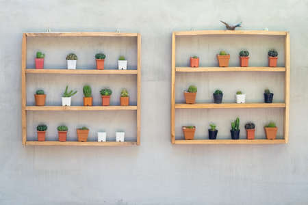 Small cactus on handmade wood shelfs hanged on the bare concret wall, decoration in the home garden
