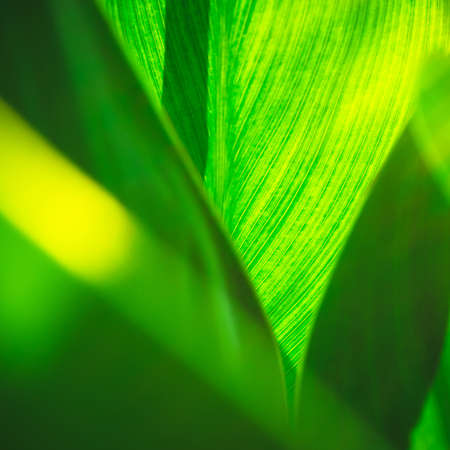 Closeup or macro shot of small green leaf in sunlight, abstract nature background