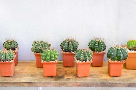 Small cactus on wood shelf hanged on the bare concret wall