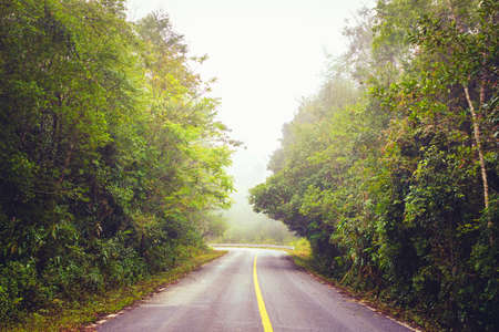 Road through the forest in the morning with mist on the sky, Phu Hin Rong Kla National Park, Phitsanulok, Thailand