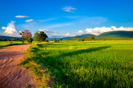 Green rice field and dirt road in the farmland, countryside of Thailand