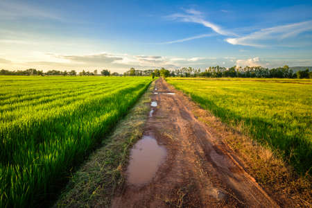 Wet dirt road after rain through the rice field before sunset, countryside in Phitsanulok province of Thailand 写真素材