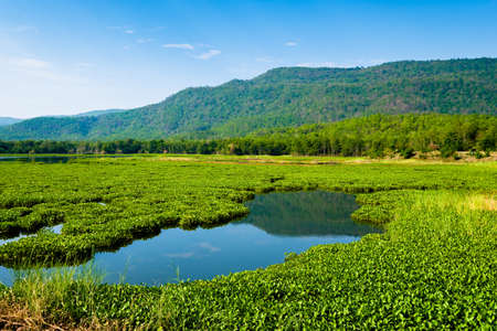 Reservoir in countryside of Thailand cover by mass of water hyacinth that growth rapidly and obstrcut the distribution
