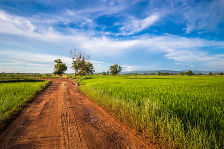 Rough dirt road and green rice field in countryside of Thailand